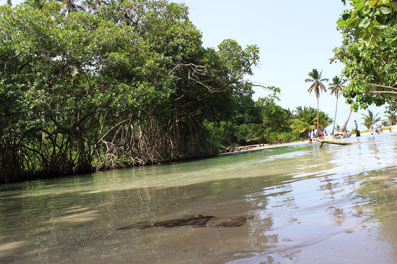 Playa Rincón de las Galeras_16