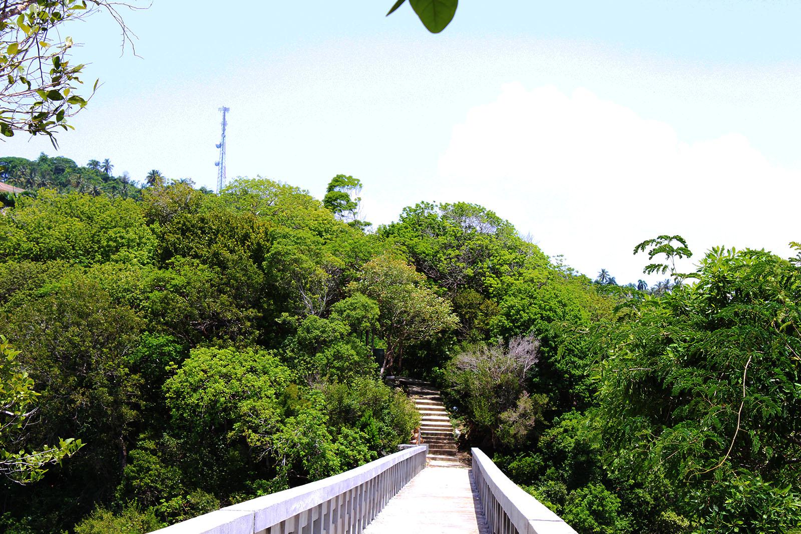 El Puente de Santa Bárbara de Samaná_2